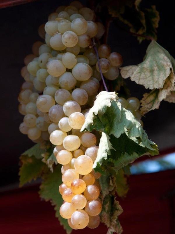 グルジアワイン9